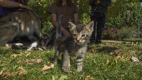 While taking images of dogs all day it was a treat to find a group of kittens hanging out near Boulder Creek. (Photo: Joseph Wirth)