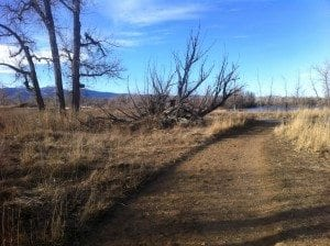 The trail at Sawhill Ponds in this lovely January weather we have been having