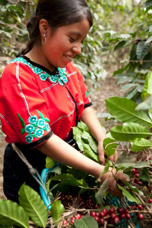 Guatemalan coffee farmer