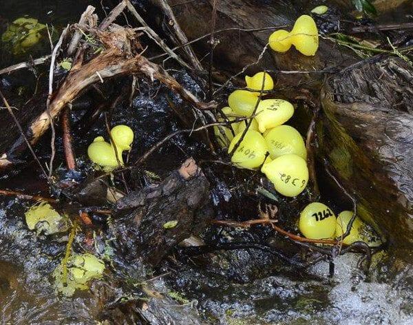 Ducks by Paul Aiken