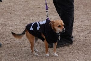 A dog with a skull and crossbones sweater, because she's hardcore.