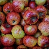 autumn_apples_200336