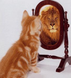 Kitten Lion Resized
