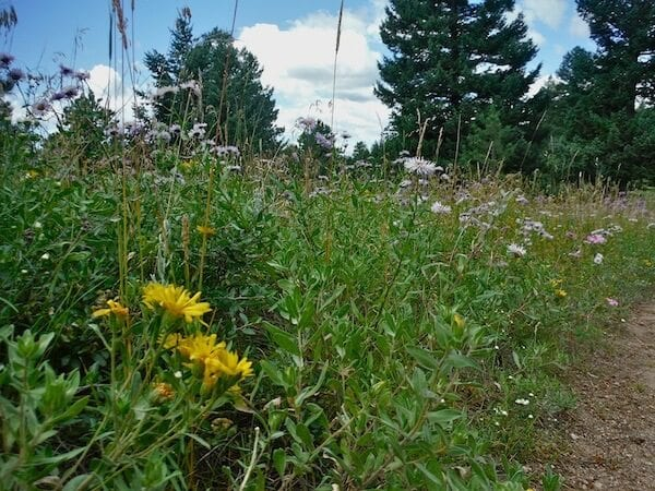 Flowers along Green Bear Trail