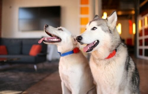 Dogs sporting their WÜF collars. (Photo Credit: getwuf.com)