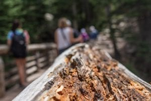 Broken wood from the hiking trail