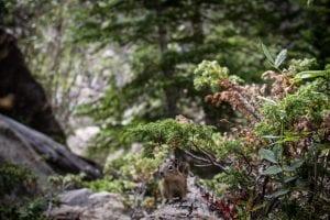 Boulder nature sight